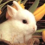 """""""Bunny Wisdom"""""""