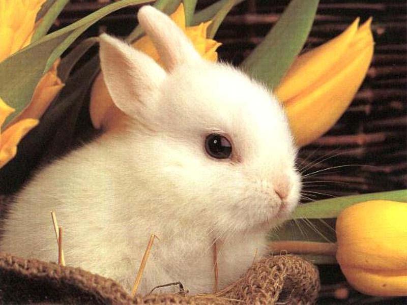 bunny wisdom