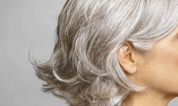 grey-hair585_204681a