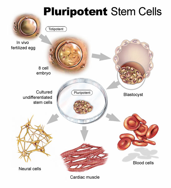 many types of stem cells