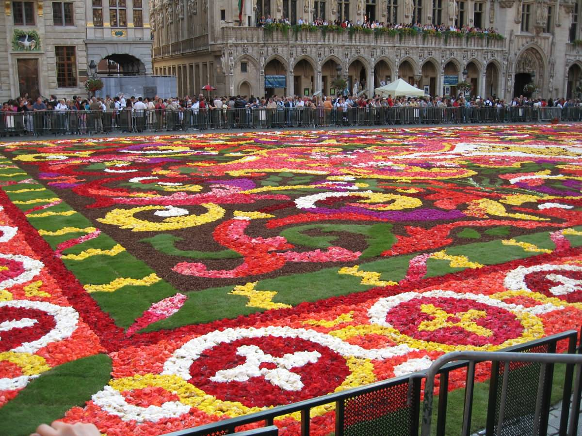 begonia flower carpet